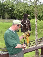 Kielder Birds of Prey Centre