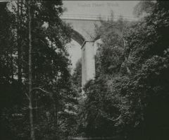 Viaduct at Plessey Woods