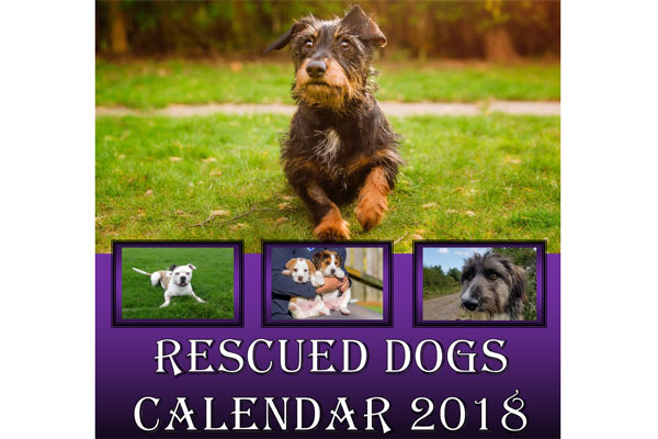 Rescue dogs to be stars of 2018 charity calendar