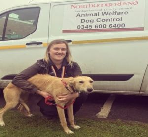 Read more about Beware selling pets online as lurcher found roaming streets